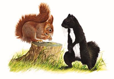 scoiattolo4