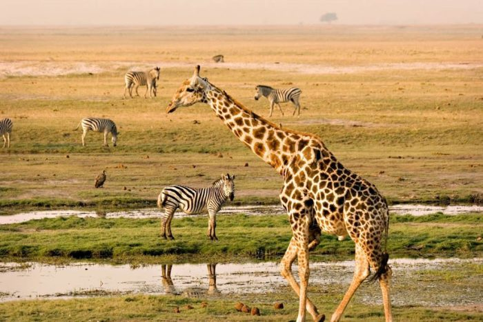 © africantravelhub.com