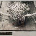 L'occhio bionico della Scienza: il SEM