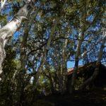 Impronta ecologica: quanti Pianeti Terra servono?