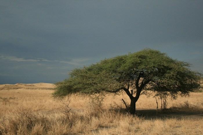 Esempio di paesaggio caratterizzato dalla savana.