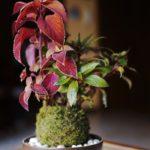Un piccolo giardino pensile con i Kokedama