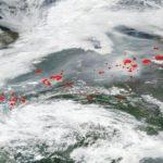 Gli incendi che devastano il Pianeta: le conseguenze sulla biodiversità