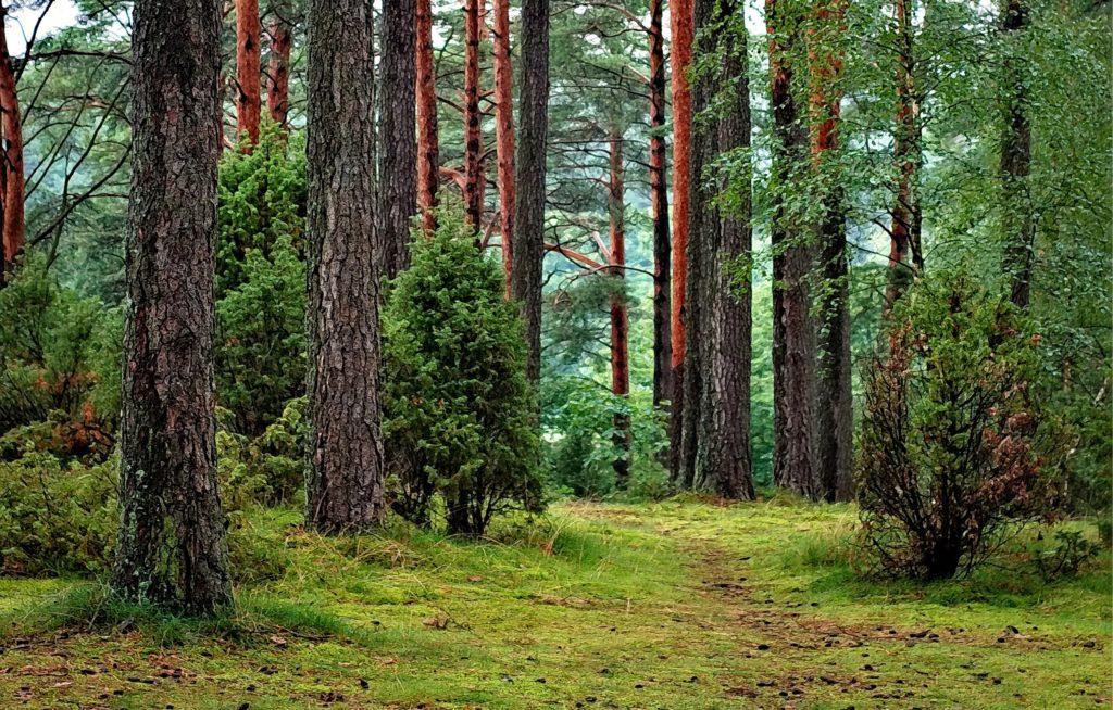Foreste e certificazioni