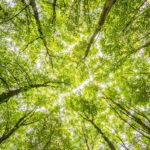 Non solo legno: la grande risorsa delle foreste