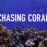 Chasing coral: il documentario sullo sbiancamento dei coralli