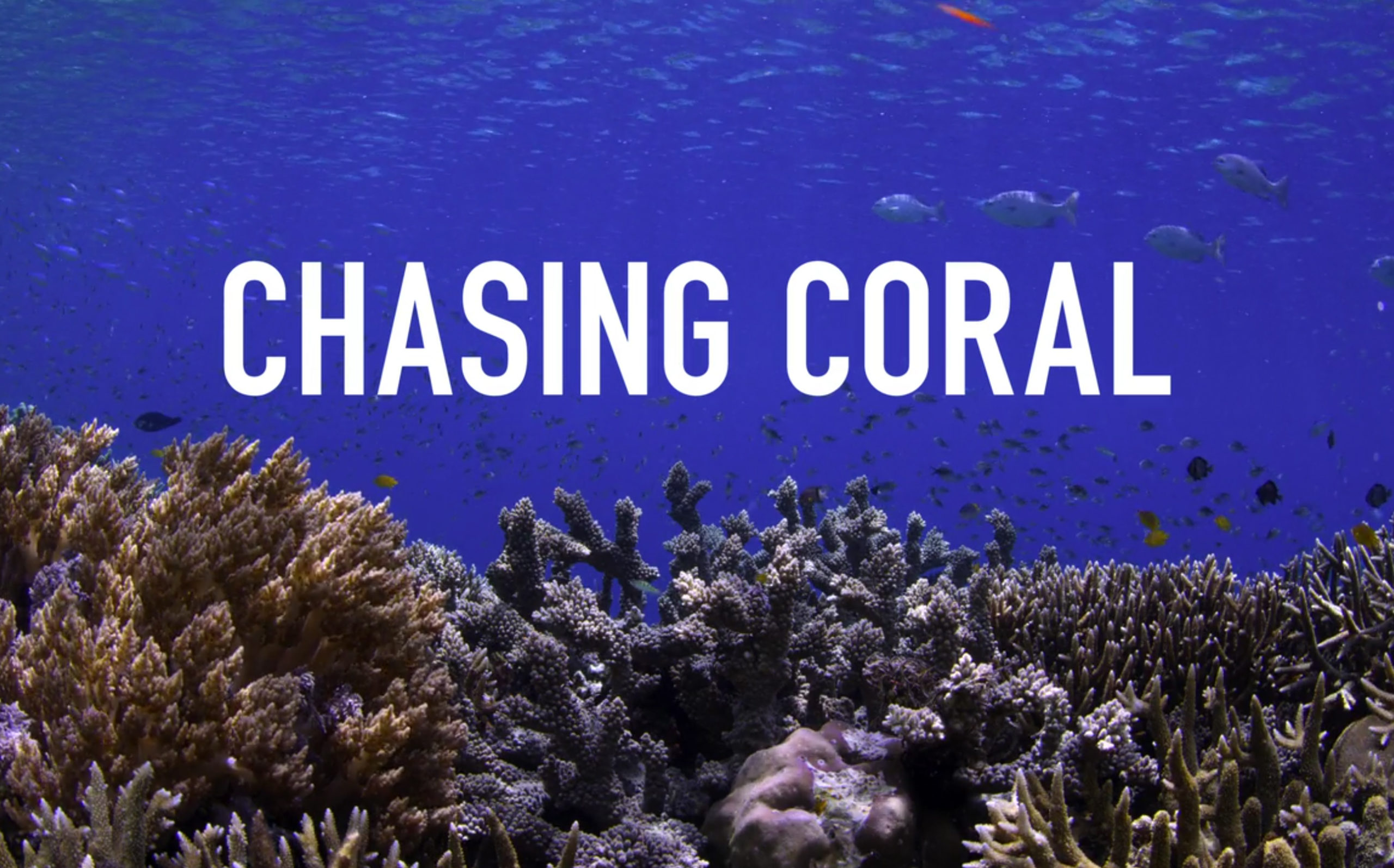 chasing-coral-movie-copy