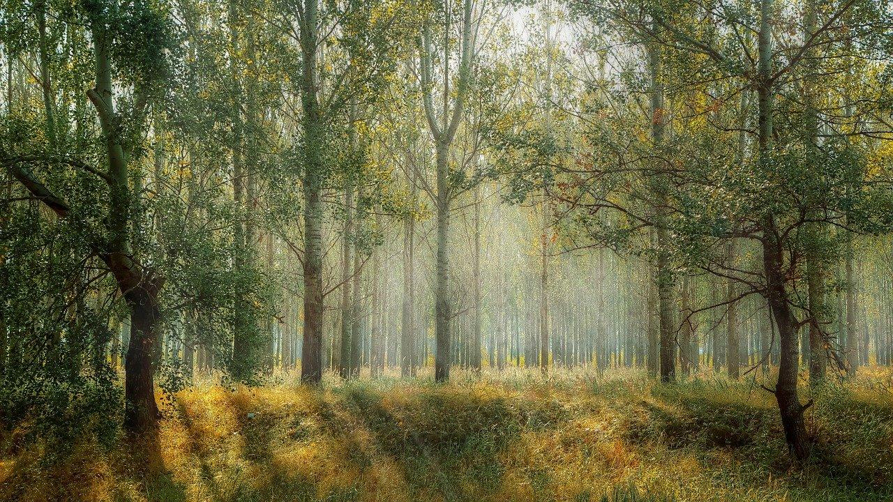 foreste (3)